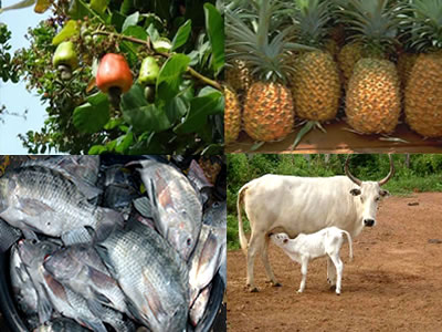 Agriculture et pêche du 08 au 12 Avril 2019