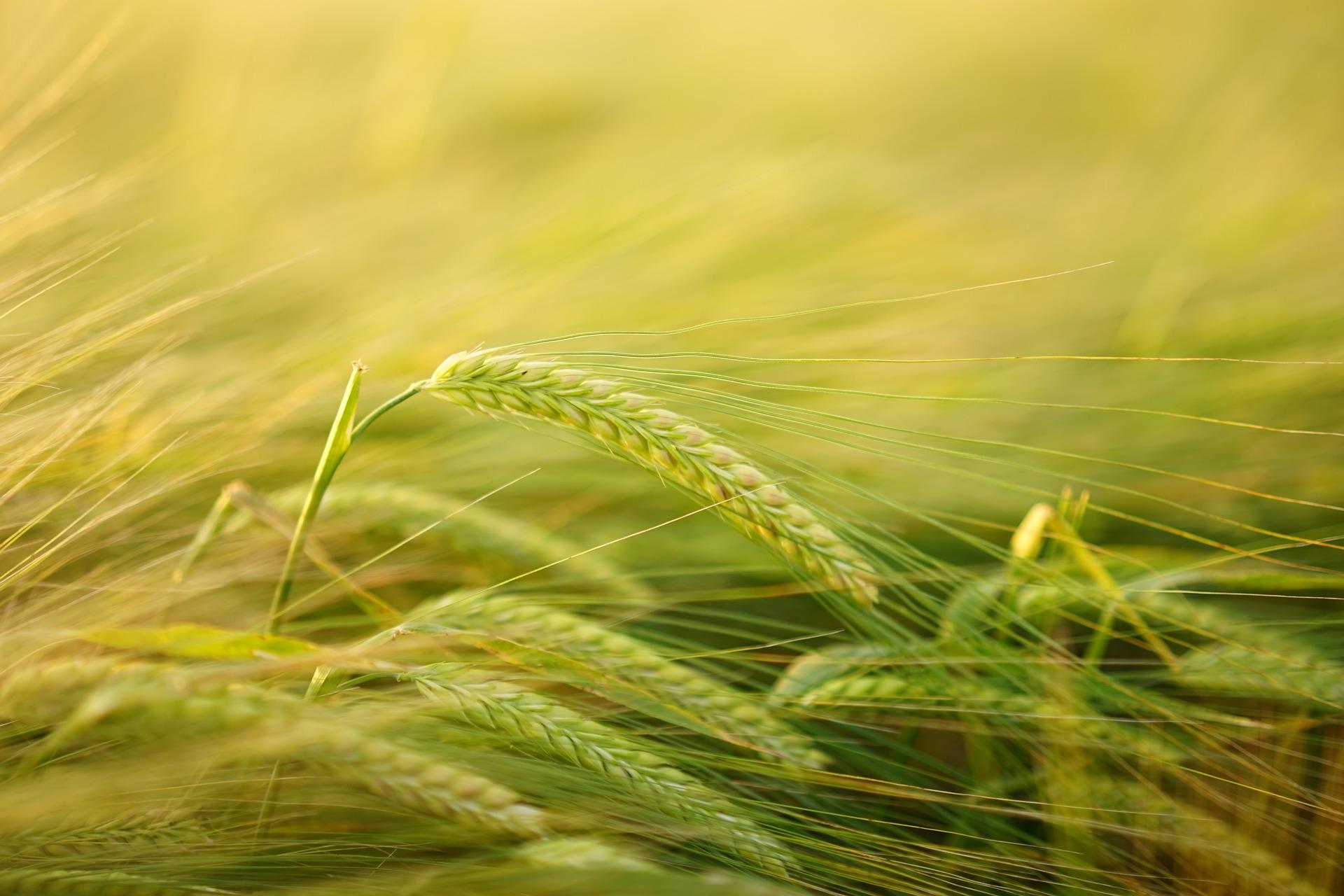 Agriculture du 16 au 20 Octobre 2017