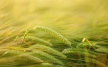 Agriculture du 30 Octobre au Novembre 2017