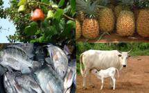 Agriculture et pêche du 03 au 07 Juin 2019